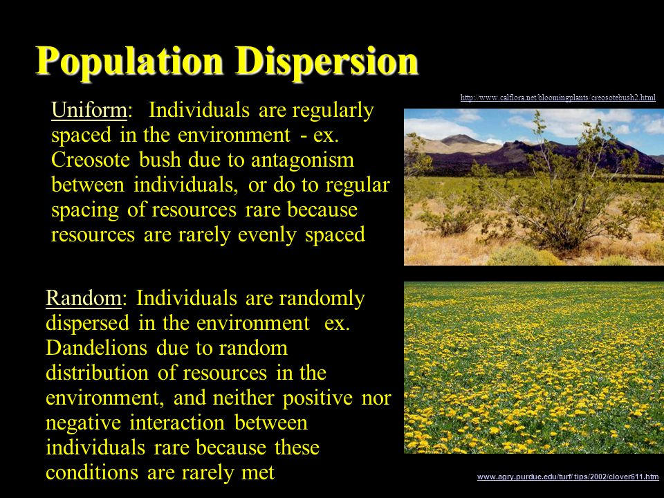 Population Dispersion Population dispersion is the spatial pattern of distribution There are three main classifications Clumped: individuals are lumped into groups ex.