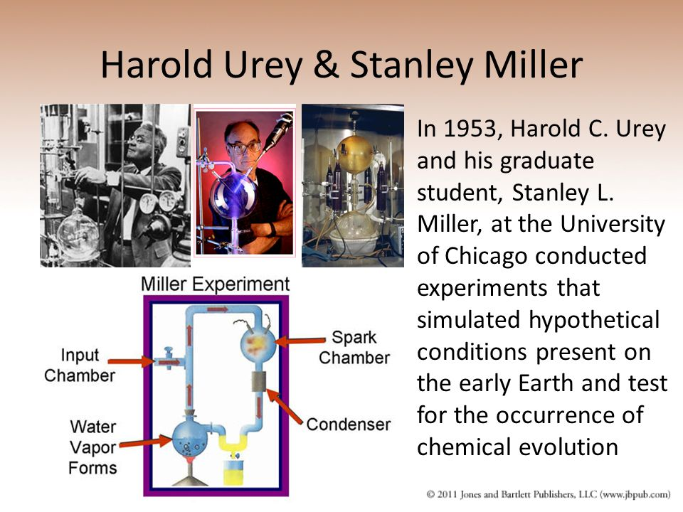 Harold Urey & Stanley Miller In 1953, Harold C. Urey and his graduate student, Stanley L. Miller, at the University of Chicago conducted experiments t