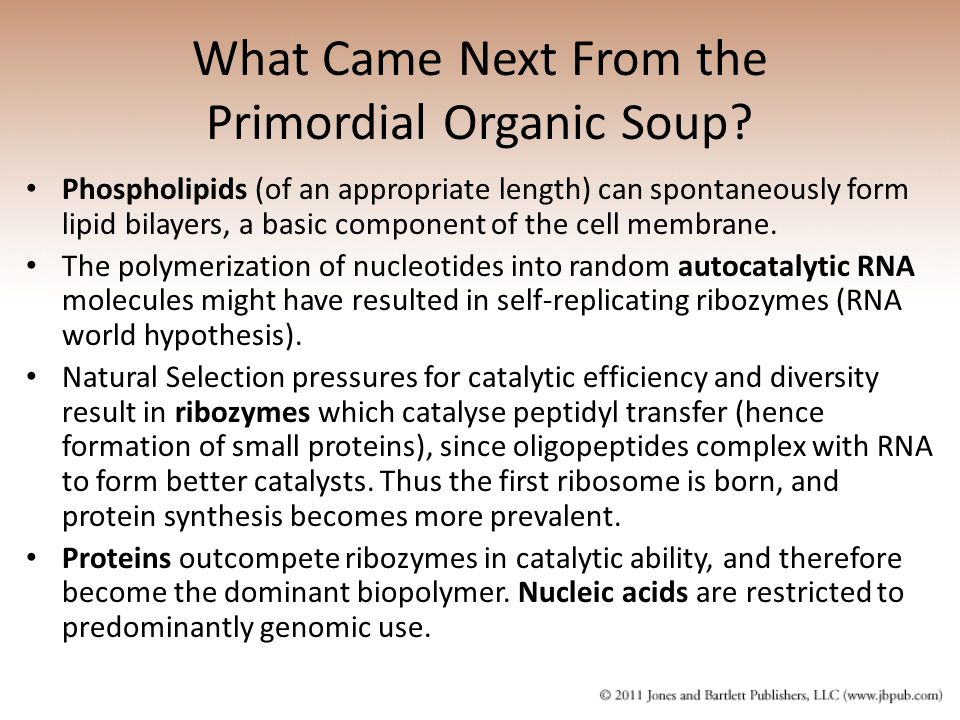 What Came Next From the Primordial Organic Soup.