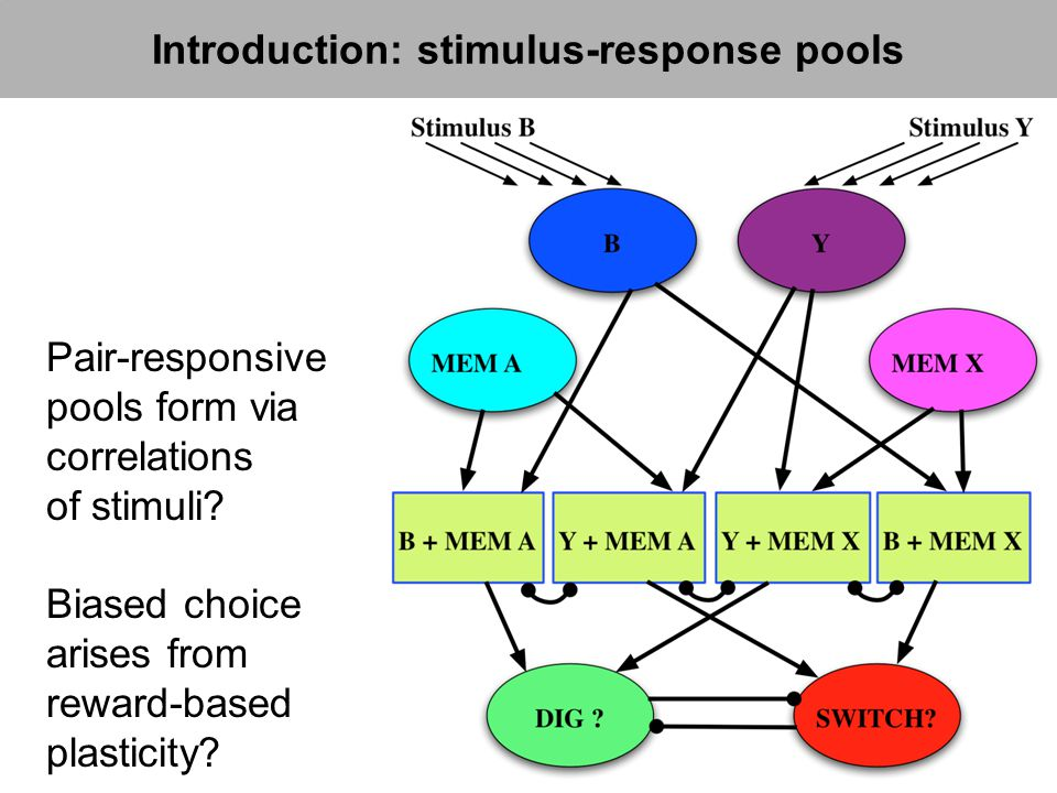 Biased choice arises from reward-based plasticity? Pair-responsive pools form via correlations of stimuli? Introduction: stimulus-response pools