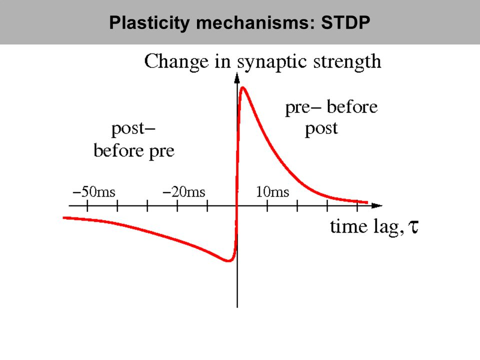 Plasticity mechanisms: STDP