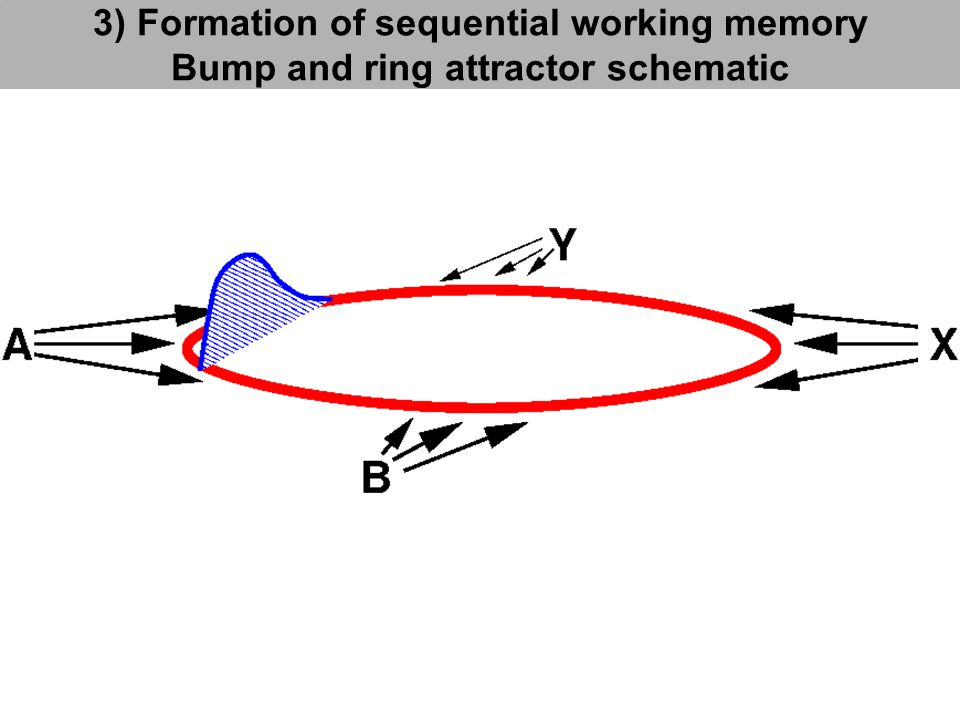 3) Formation of sequential working memory Bump and ring attractor schematic