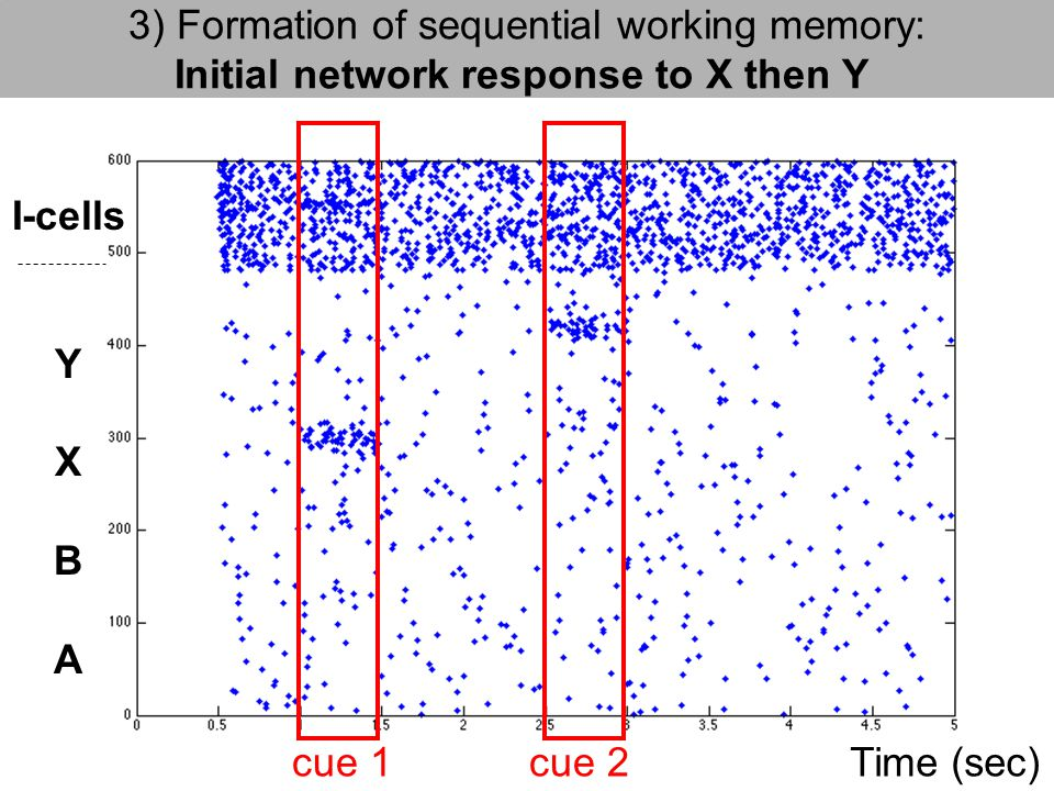 3) Formation of sequential working memory: Initial network response to X then Y I-cells Y X B A cue 2cue 1Time (sec)