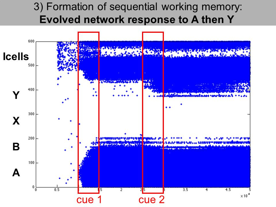 cue 2 3) Formation of sequential working memory: Evolved network response to A then Y Icells Y X B A