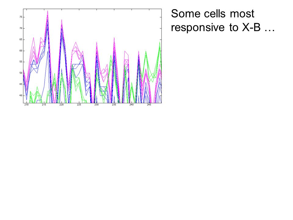 Some cells most responsive to X-B …