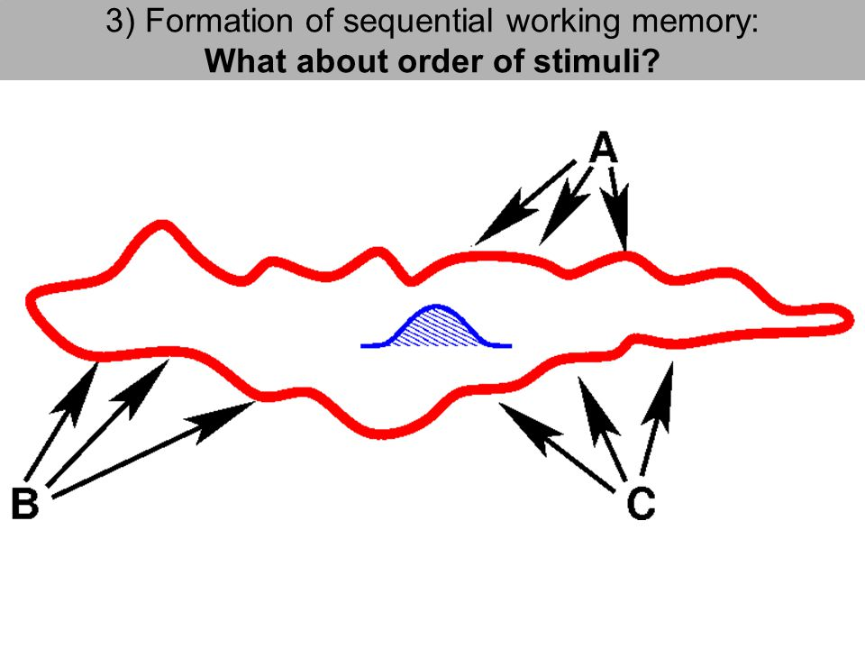 3) Formation of sequential working memory: What about order of stimuli?