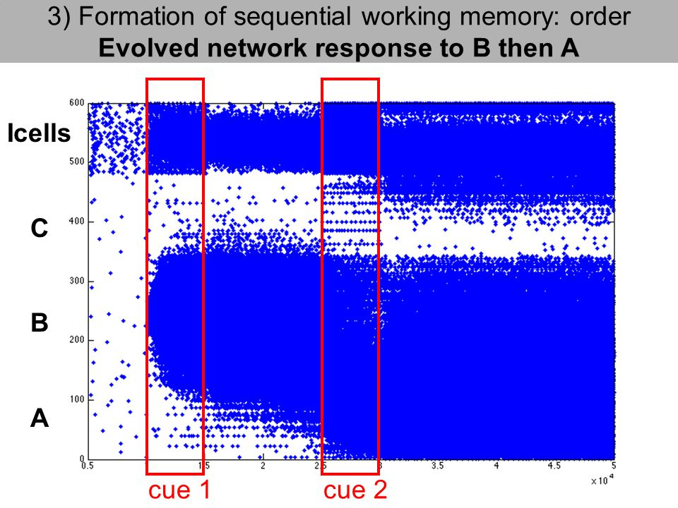 3) Formation of sequential working memory: order Evolved network response to B then A cue 1cue 2 Icells C B A