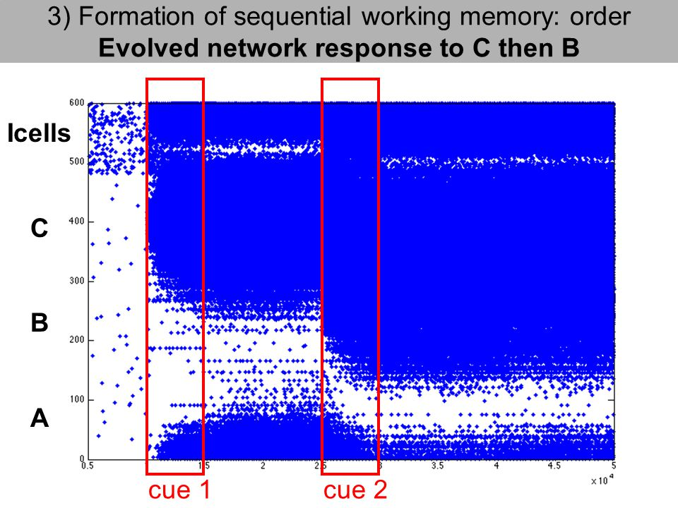 3) Formation of sequential working memory: order Evolved network response to C then B cue 1cue 2 Icells C B A