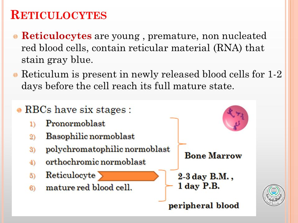  Reticulocytes are young, premature, non nucleated red blood cells, contain reticular material (RNA) that stain gray blue.