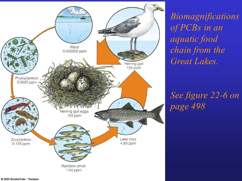 Biomagnifications of PCBs in an aquatic food chain from the Great Lakes. See figure 22-6 on page 498