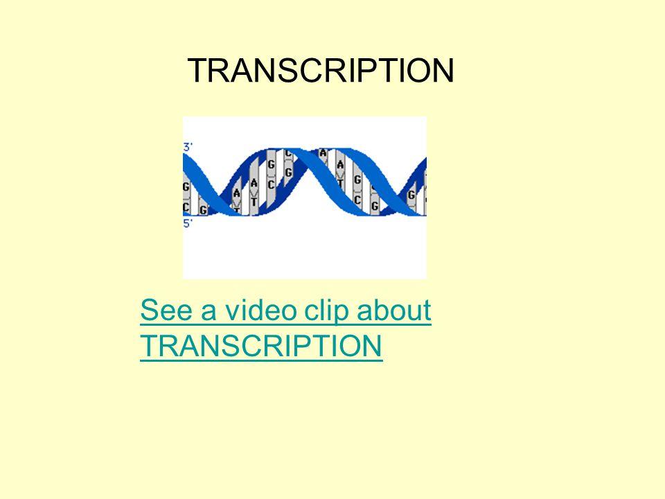 TRANSCRIPTION See a video clip about TRANSCRIPTION