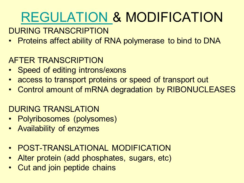 REGULATION REGULATION & MODIFICATION DURING TRANSCRIPTION Proteins affect ability of RNA polymerase to bind to DNA AFTER TRANSCRIPTION Speed of editing introns/exons access to transport proteins or speed of transport out Control amount of mRNA degradation by RIBONUCLEASES DURING TRANSLATION Polyribosomes (polysomes) Availability of enzymes POST-TRANSLATIONAL MODIFICATION Alter protein (add phosphates, sugars, etc) Cut and join peptide chains