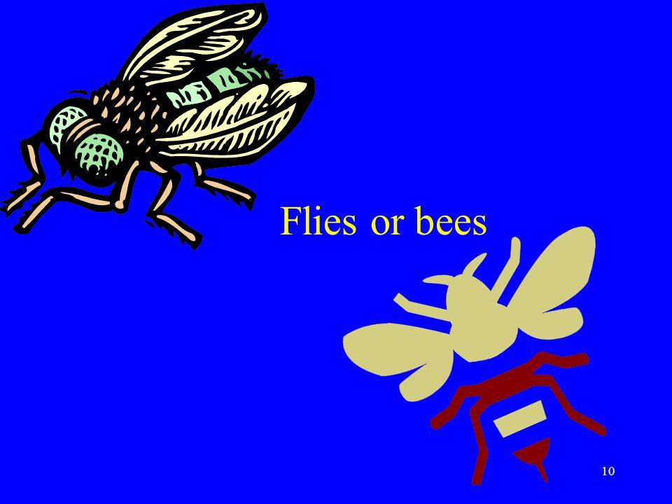 10 Flies or bees