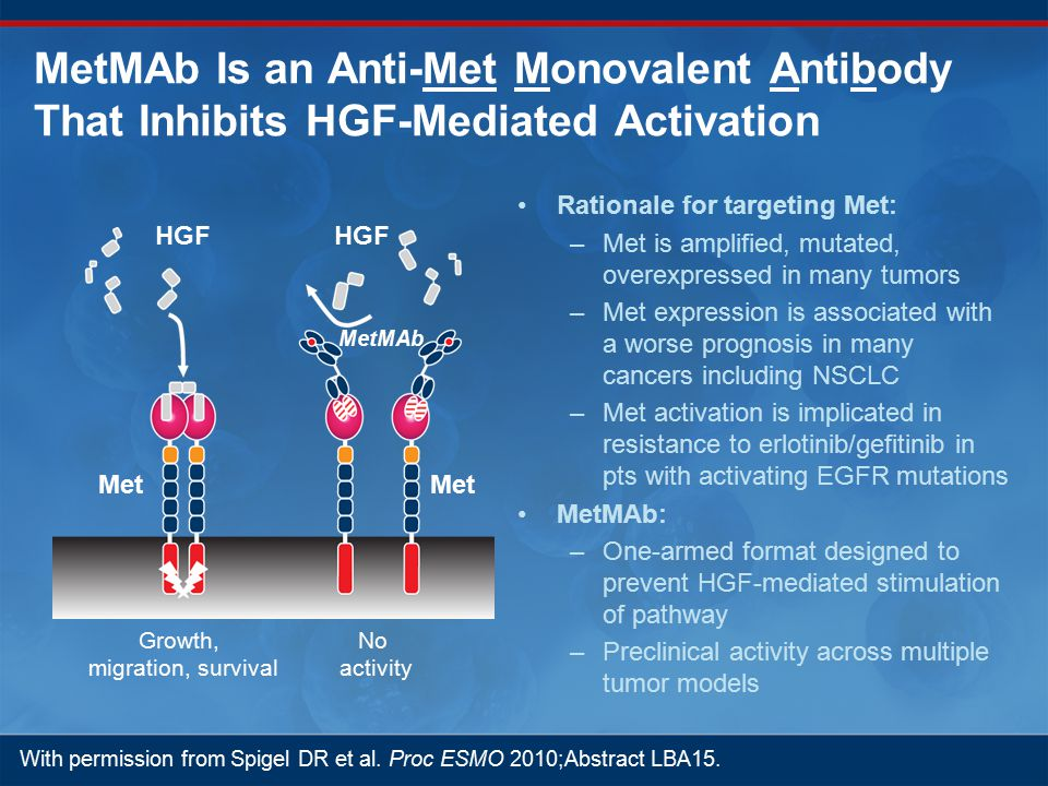 MetMAb Is an Anti-Met Monovalent Antibody That Inhibits HGF-Mediated Activation Rationale for targeting Met: –Met is amplified, mutated, overexpressed in many tumors –Met expression is associated with a worse prognosis in many cancers including NSCLC –Met activation is implicated in resistance to erlotinib/gefitinib in pts with activating EGFR mutations MetMAb: –One-armed format designed to prevent HGF-mediated stimulation of pathway –Preclinical activity across multiple tumor models HGF Met MetMAb Growth, migration, survival No activity With permission from Spigel DR et al.