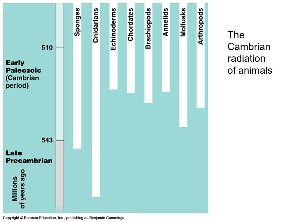 The Cambrian radiation of animals