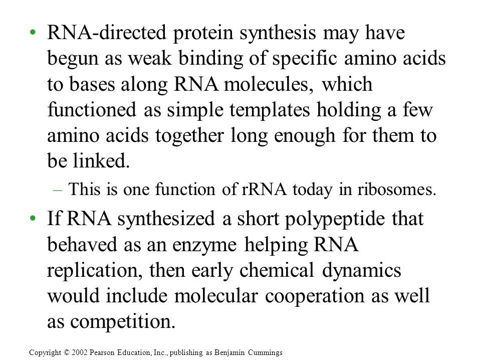 RNA-directed protein synthesis may have begun as weak binding of specific amino acids to bases along RNA molecules, which functioned as simple templat