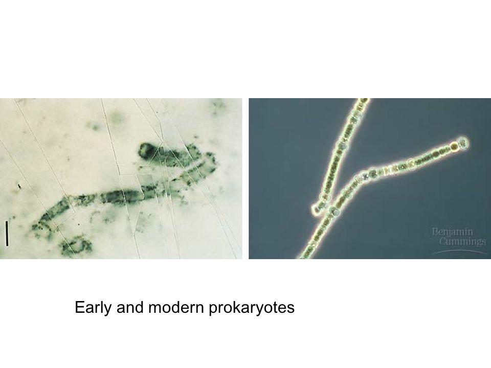 Early and modern prokaryotes