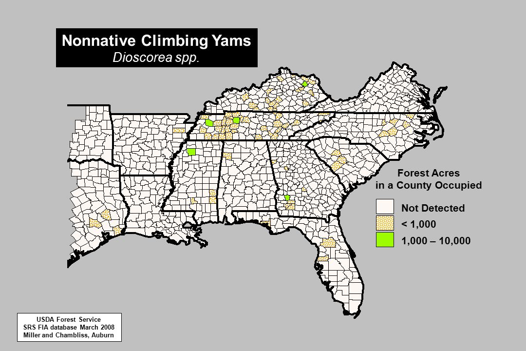 1,000 – 10,000 < 1,000 Not Detected Forest Acres in a County Occupied Nonnative Climbing Yams Dioscorea spp.