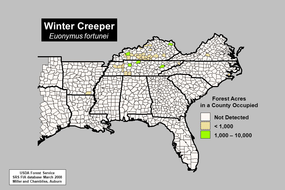 1,000 – 10,000 < 1,000 Not Detected Forest Acres in a County Occupied Winter Creeper Euonymus fortunei USDA Forest Service SRS FIA database March 2008 Miller and Chambliss, Auburn