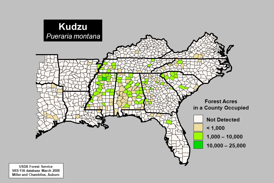Kudzu Pueraria montana 10,000 – 25,000 1,000 – 10,000 < 1,000 Not Detected Forest Acres in a County Occupied USDA Forest Service SRS FIA database March 2008 Miller and Chambliss, Auburn