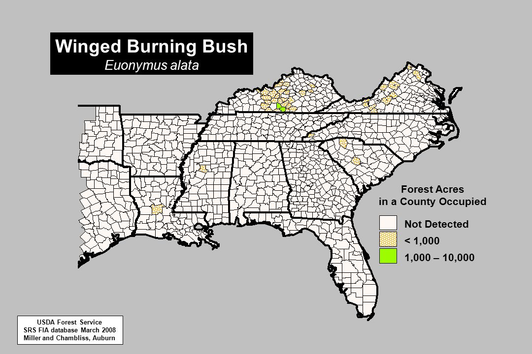 Winged Burning Bush Euonymus alata 1,000 – 10,000 < 1,000 Not Detected Forest Acres in a County Occupied USDA Forest Service SRS FIA database March 2008 Miller and Chambliss, Auburn