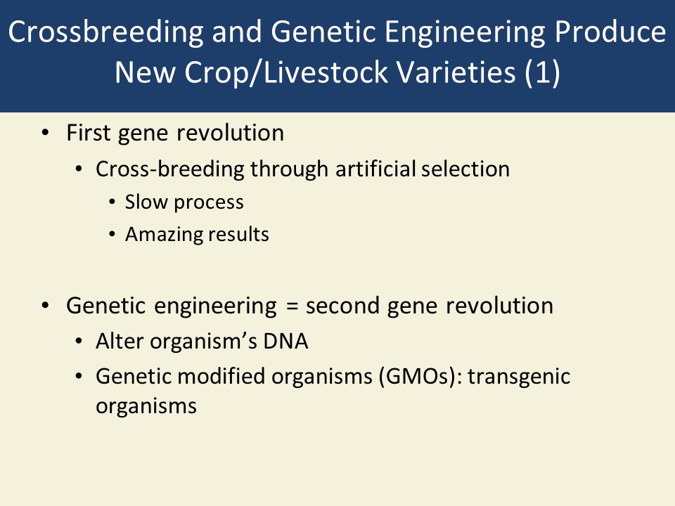 Crossbreeding and Genetic Engineering Produce New Crop/Livestock Varieties (1) First gene revolution Cross-breeding through artificial selection Slow