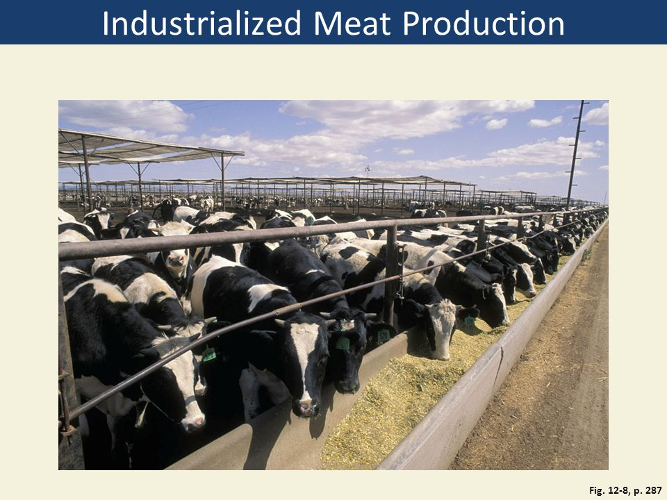 Industrialized Meat Production Fig. 12-8, p. 287