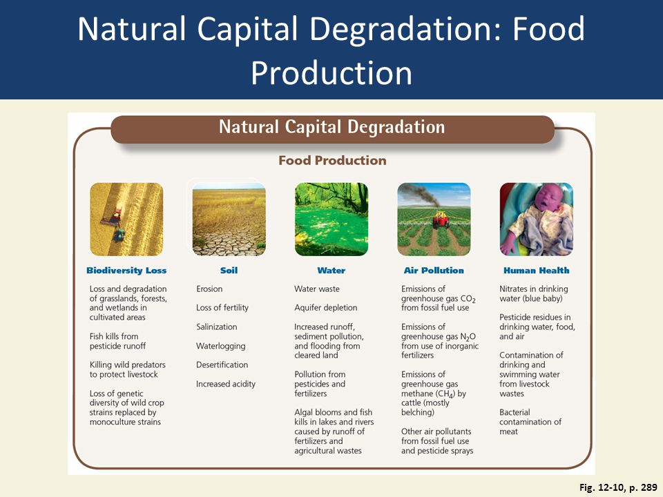 Natural Capital Degradation: Food Production Fig. 12-10, p. 289