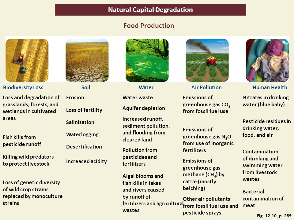 Natural Capital Degradation Food Production Biodiversity LossSoilWaterAir PollutionHuman Health Loss and degradation of grasslands, forests, and wetla