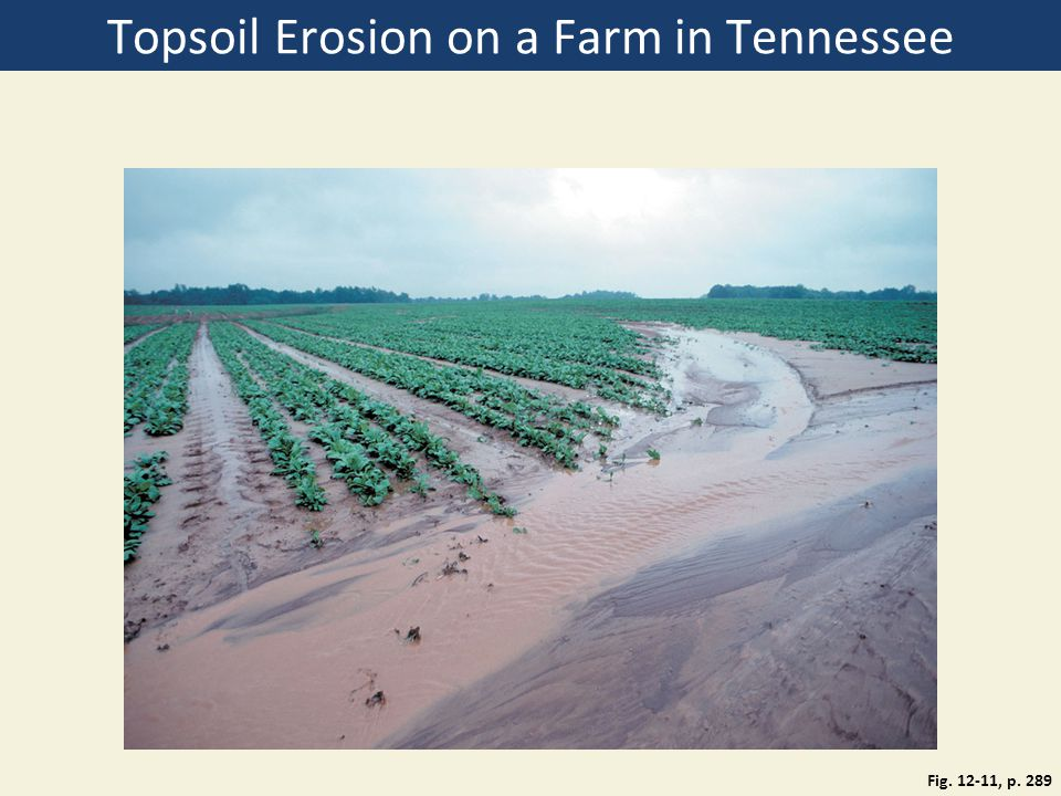 Topsoil Erosion on a Farm in Tennessee Fig. 12-11, p. 289