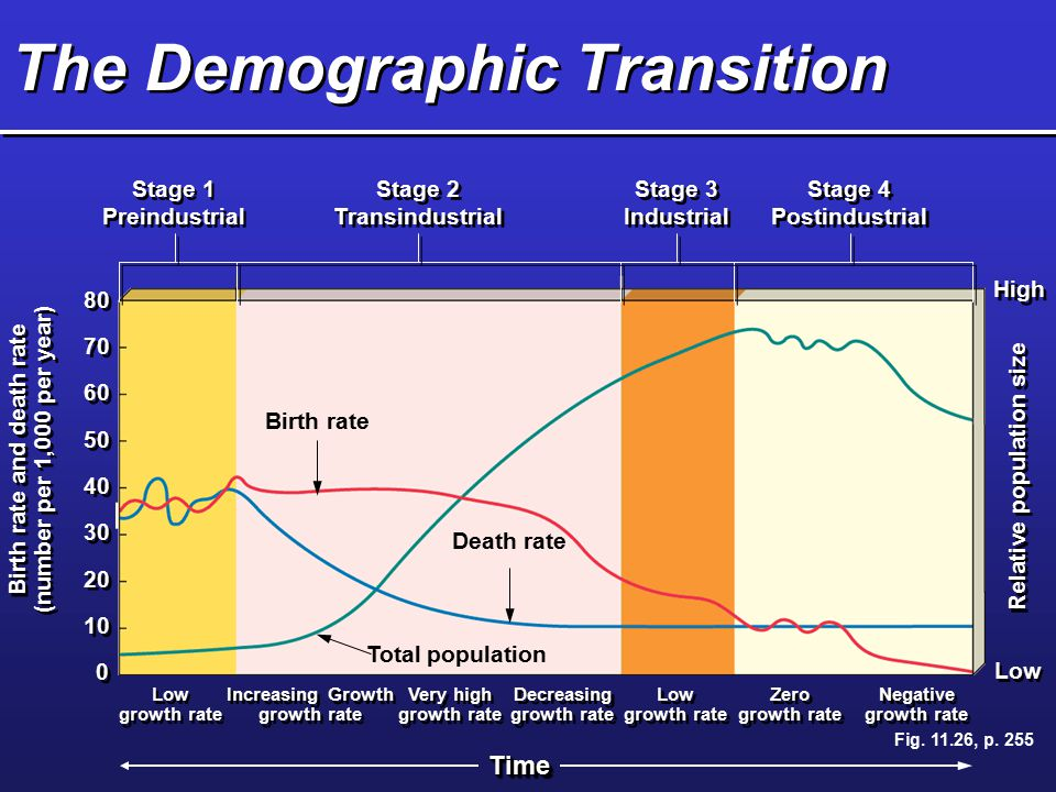 The Demographic Transition Low High Relative population size Birth rate and death rate (number per 1,000 per year) Birth rate and death rate (number p