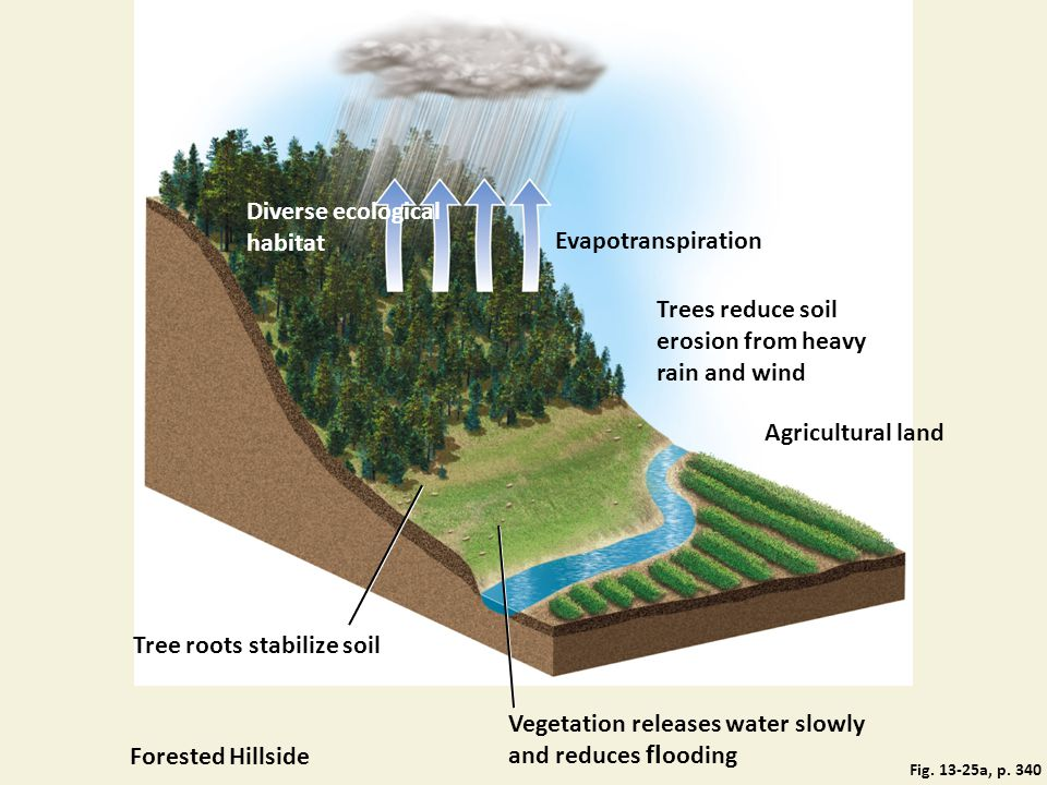 Fig. 13-25a, p. 340 Diverse ecological habitat Evapotranspiration Trees reduce soil erosion from heavy rain and wind Agricultural land Tree roots stab