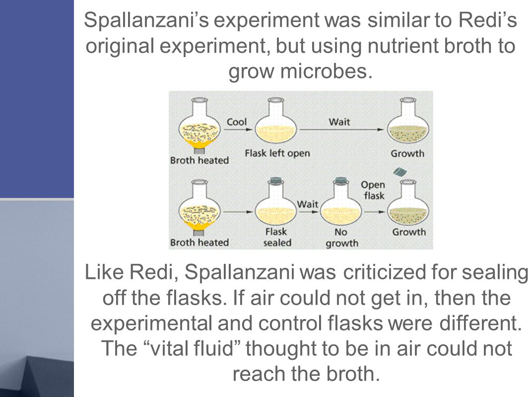 Spallanzani's experiment was similar to Redi's original experiment, but using nutrient broth to grow microbes. Like Redi, Spallanzani was criticized f
