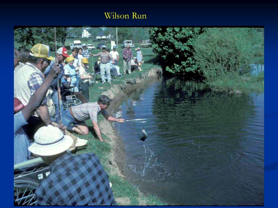 Wilson Run