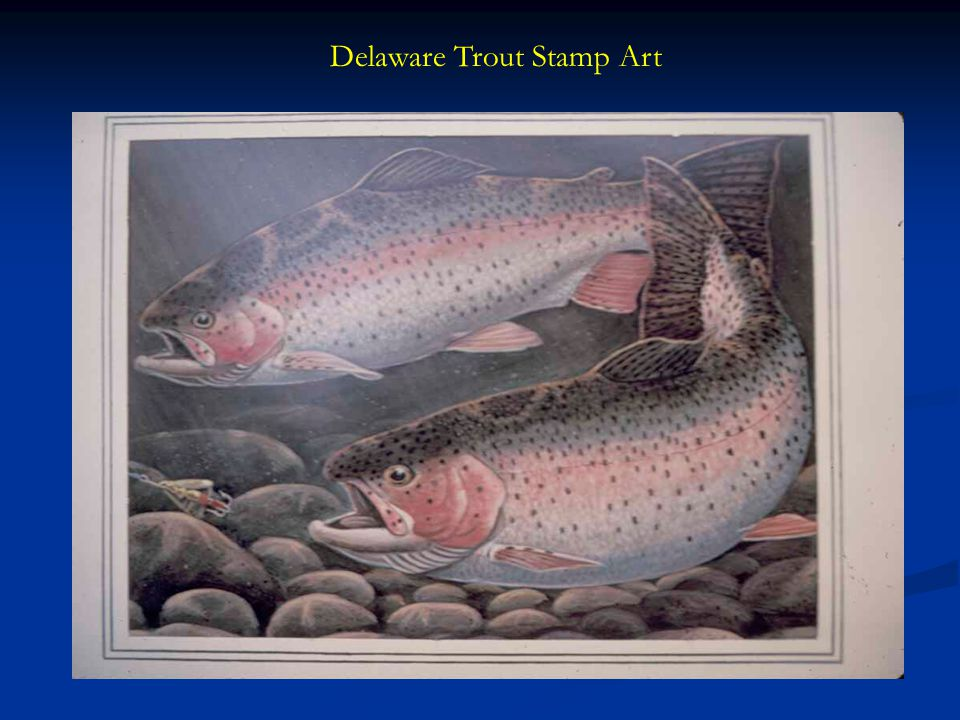 Delaware Trout Stamp Art