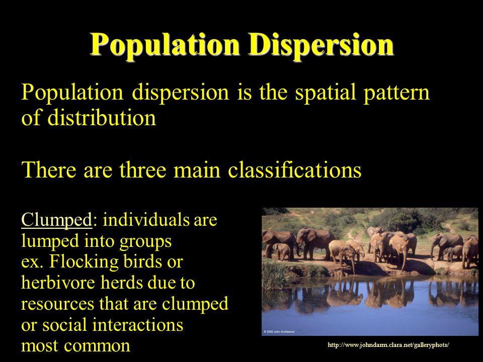 Population Dispersion Population dispersion is the spatial pattern of distribution There are three main classifications Clumped: individuals are lumpe