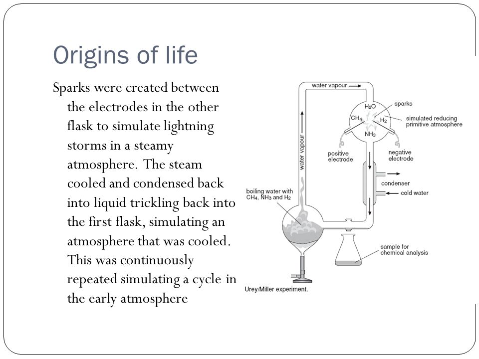 Origins of life After a week, they observed that as much as 10-15% of the carbon was in the form of simple organic compounds, with 2% forming amino acids.