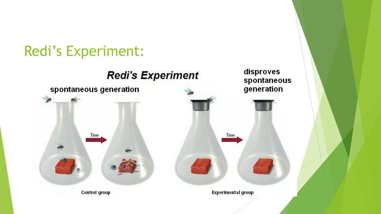 Redi's Experiment: