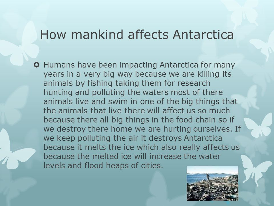 How mankind affects Antarctica  Humans have been impacting Antarctica for many years in a very big way because we are killing its animals by fishing