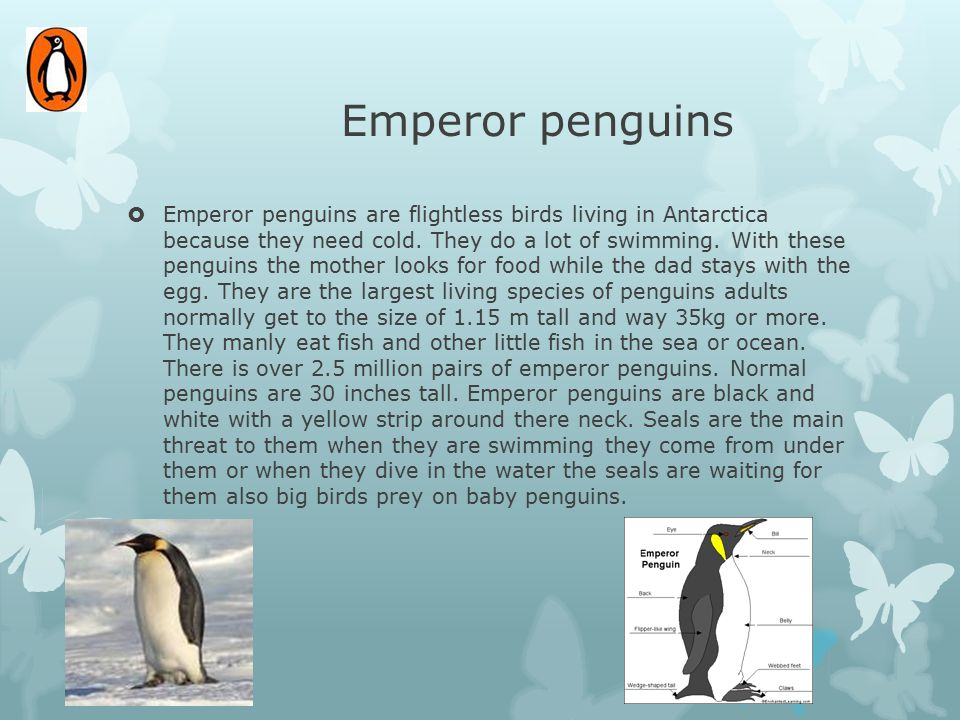 Emperor penguins  Emperor penguins are flightless birds living in Antarctica because they need cold. They do a lot of swimming. With these penguins t