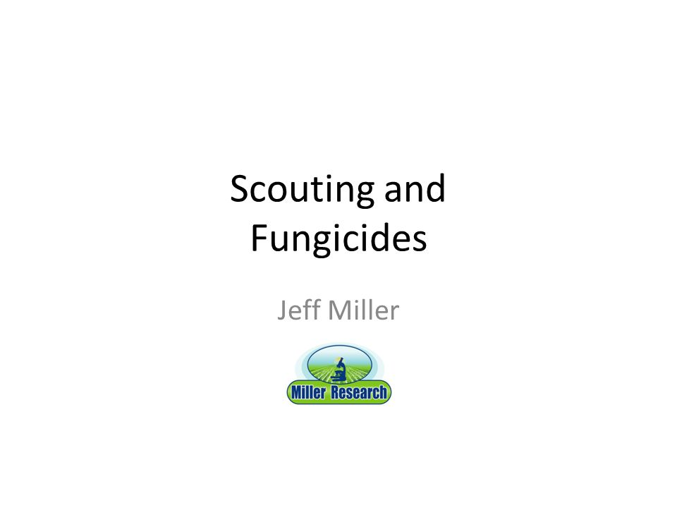 Scouting and Fungicides Jeff Miller
