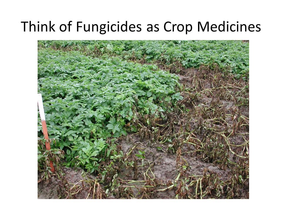 Fungicides for Use in Potato Soil fumigant Seed treatments Soil-applied products Foliar-applied products Post-harvest applications