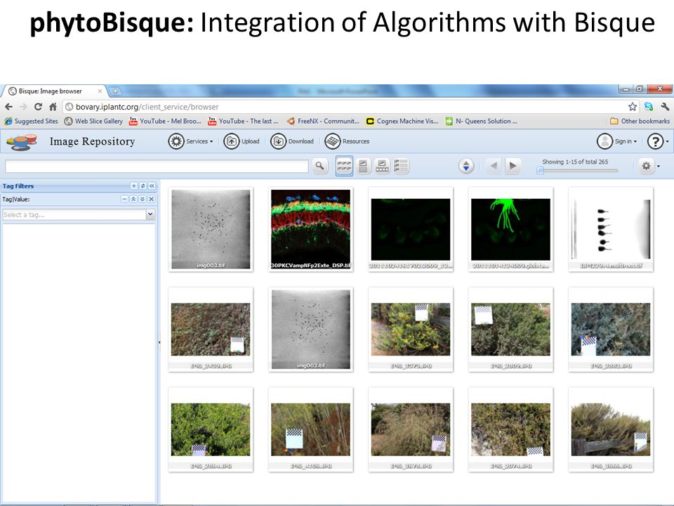 phytoBisque: Integration of Algorithms with Bisque