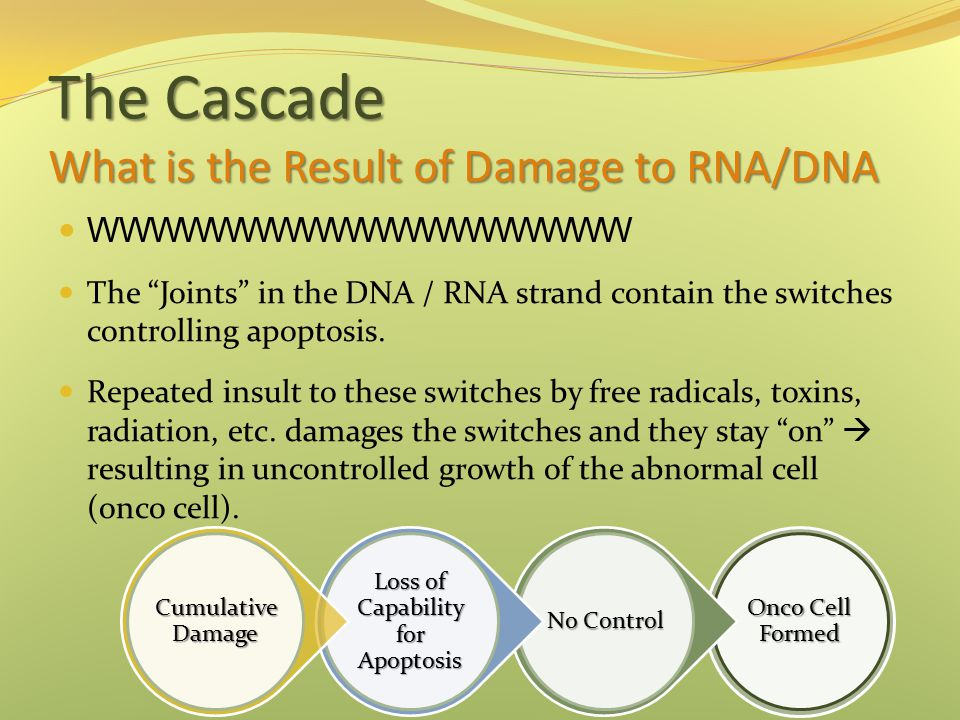 The Cascade What is the Result of Damage to RNA/DNA WWWWWWWWWWWWWWWWWW The Joints in the DNA / RNA strand contain the switches controlling apoptosis.