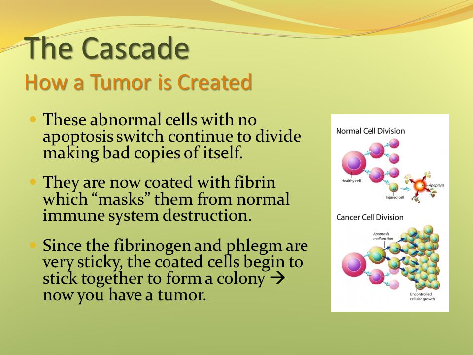 The Cascade How a Tumor is Created These abnormal cells with no apoptosis switch continue to divide making bad copies of itself.