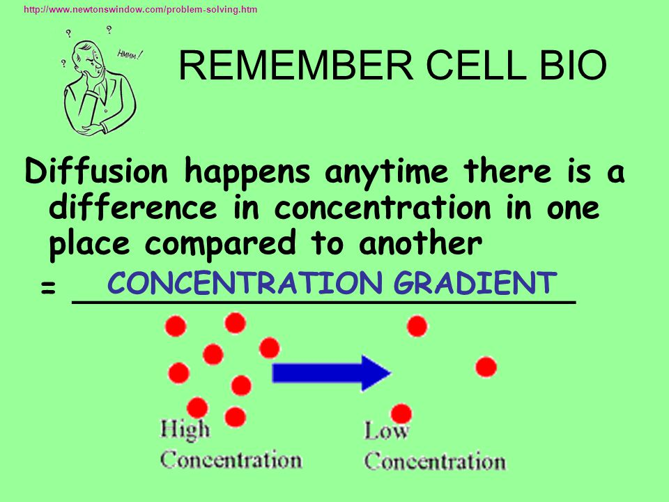 REMEMBER CELL BIO Diffusion happens anytime there is a difference in concentration in one place compared to another = ________________________ CONCENTRATION GRADIENT http://www.newtonswindow.com/problem-solving.htm