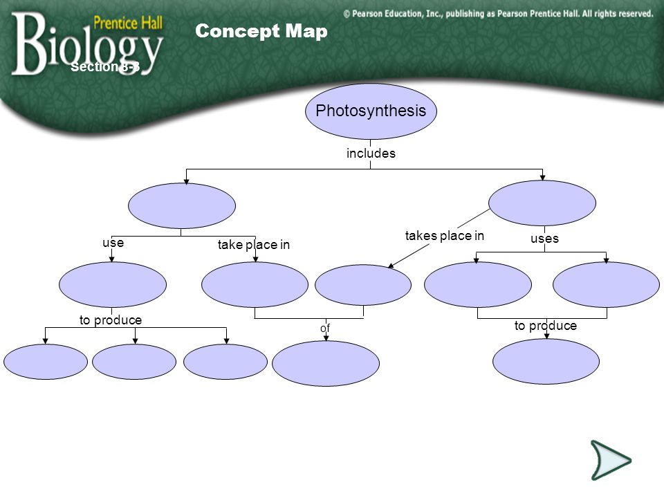 Go to Section: Photosynthesis includes of take place in takes place in uses to produce use Section 8-3 Concept Map