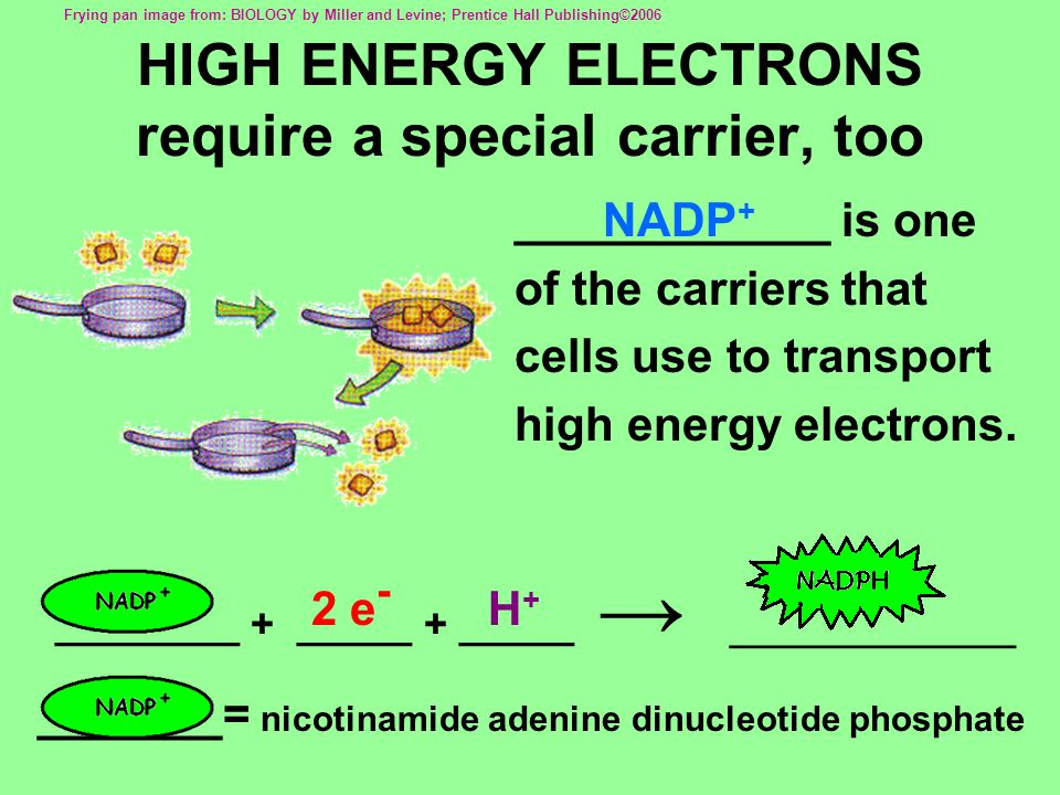 ________ + _____ + _____ → ____________ HIGH ENERGY ELECTRONS require a special carrier, too ____________ is one of the carriers that cells use to transport high energy electrons.
