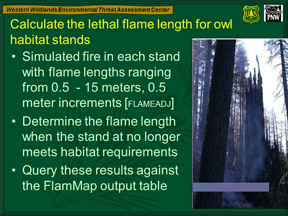 Western Wildlands Environmental Threat Assessment Center Calculate the lethal flame length for owl habitat stands Simulated fire in each stand with fl