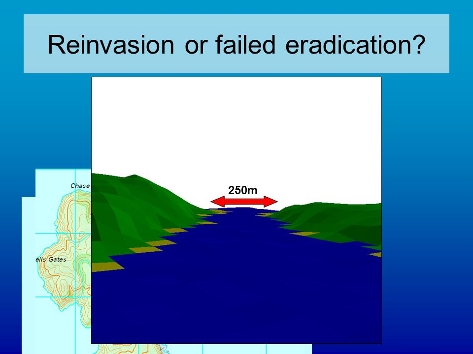 250m Reinvasion or failed eradication